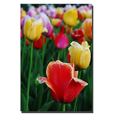 Trademark Fine Art Kurt Shaffer, 'In Amont the Tulips II' Canvas Art 24x36 Inches