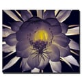 Trademark Fine Art Kurt Shaffer 'Floral Contrast' Canvas Art