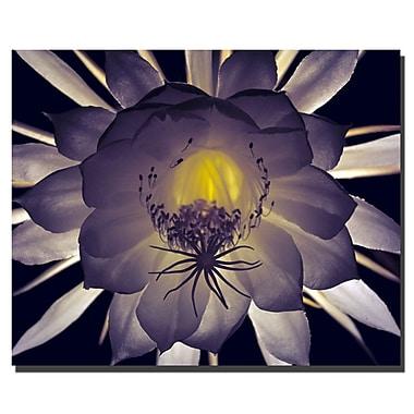 Trademark Fine Art Floral Contrast by Kurt Shaffer Canvas Art 24x36 Inches