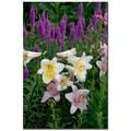 Trademark Fine Art Kurt Shaffer 'Lovely Lilies' Canvas Art