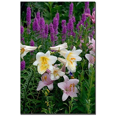 Trademark Fine Art Kurt Shaffer 'Lovely Lilies' Canvas Art