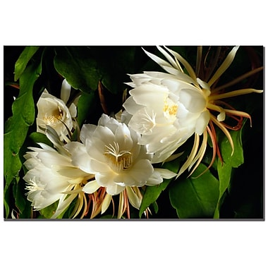 Trademark Fine Art Kurt Shaffer 'Night Blooming Cereus Abstract' Canvas Art