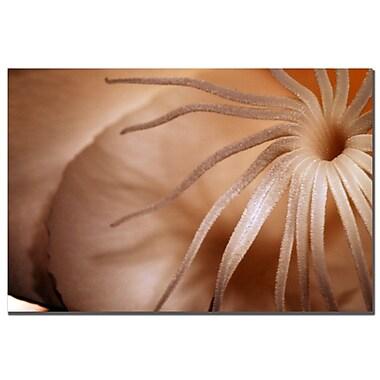 Trademark Fine Art Kurt Shaffer 'Ohio Autumn' Canvas Art