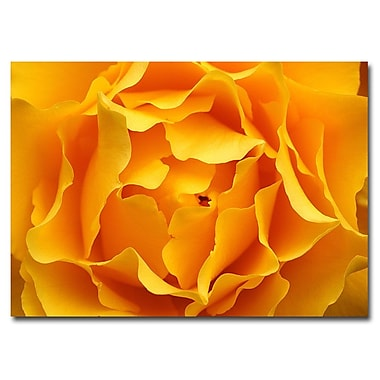 Trademark Fine Art Kurt Shaffer 'Hypnotic Yellow Rose' Canvas Art Ready to Han 14x19 Inches