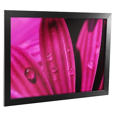 Trademark Fine Art Purple Macro Daisy Canvas Art Ready to Hang 18x24 Inches