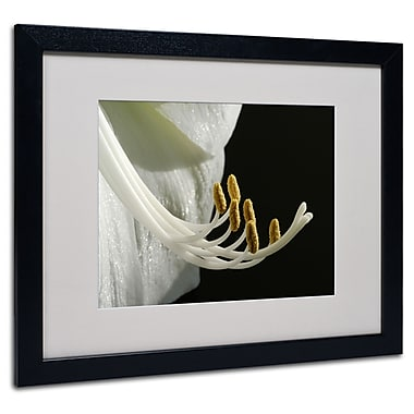 Kurt Shaffer 'Intimate Amaryllis' Matted Framed Art - 11x14 Inches - Wood Frame