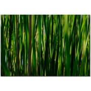 Trademark Fine Art Prairy Grass II by Kurt Shaffer Canvas Ready to Hang