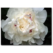 Trademark Fine Art Kurt Shaffer 'Perfect Peony' Matted Art Black Frame 11x14 Inches