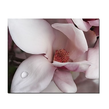 Trademark Fine Art Magnolia Teardrop by Kurt Shaffer-Gallery Wrapped 22x32 Inches