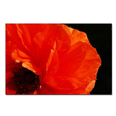 Trademark Fine Art Poppy on Black by Kurt Shaffer-Canvas Ready to Hang