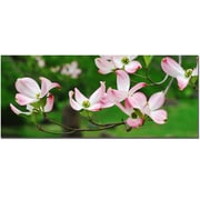 Trademark Fine Art Dogwood Flora by Kurt Shaffer-Ready to Hang Canvas Art
