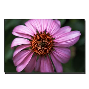 Trademark Fine Art Purple Daisy-Gallery Wrapped Canvas