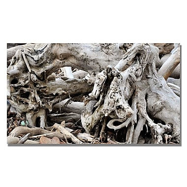 Trademark Fine Art Kurt Shaffer 'Drift Wood' Canvas Art 14x24 Inches