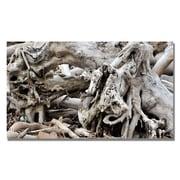 Trademark Fine Art Kurt Shaffer 'Drift Wood' Canvas Art 18x32 Inches