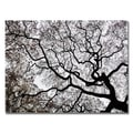 Trademark Fine Art Kurt Shaffer 'Japanese Maple Spring Abstract II' Canvas Art 22x32 Inches