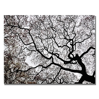 Trademark Fine Art Kurt Shaffer 'Japanese Maple Spring Abstract II' Canvas Art 30x47 Inches