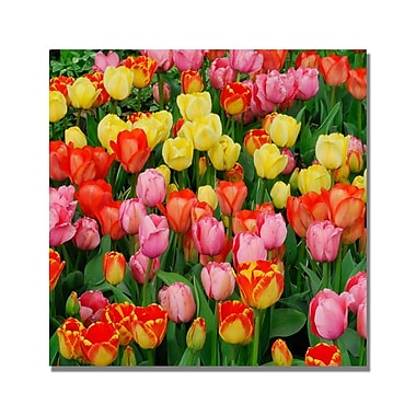 Trademark Fine Art Kurt Shaffer 'Living Bouquet of Tulips' Canvas Art 18x18 Inches
