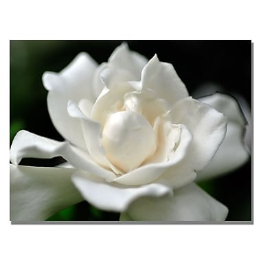 Trademark Fine Art Kurt Shaffer 'Lovely Gardenia' Canvas Art 35x47 Inches