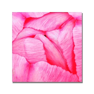 Trademark Fine Art Kurt Shaffer 'Pink Tulip Abstract' Canvas Art 18x18 Inches