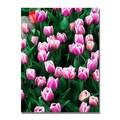 Trademark Fine Art Kurt Shaffer 'Purple White Tulips and One Red' Canvas Art 18x24 Inches
