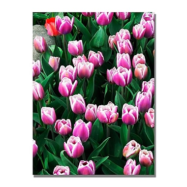 Trademark Fine Art Kurt Shaffer 'Purple White Tulips and One Red' Canvas Art 22x32 Inches
