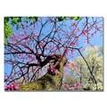 Trademark Fine Art Kurt Shaffer 'Spring up the Redbud' Canvas Art 30x47 Inches