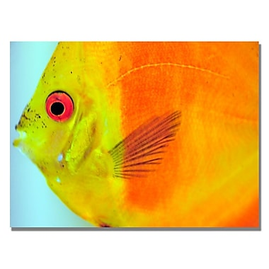 Trademark Fine Art Kurt Shaffer 'Tropical Fish Close-up' Canvas Art 22x32 Inches