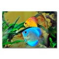 Trademark Fine Art Kurt Shaffer 'Two Tropical Fish II' Canvas Art 30x47 Inches
