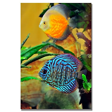 Trademark Fine Art Kurt Shaffer 'Two Tropical Fish' Canvas Art 30x47 Inches