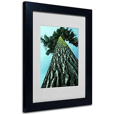 Trademark Fine Art Kurt Shaffer 'A Tree of Life' Matted Art Black Frame 16x20 Inches