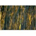 Trademark Fine Art Prairy Grass I by Kurt Shaffer Canvas Ready to Hang