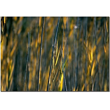 Trademark Fine Art Prairy Grass I by Kurt Shaffer Canvas Ready to Hang