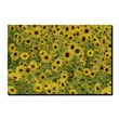 Trademark Fine Art A Sunflower Day by Kurt Shaffer-Gallery Wrapped  Canvas 14x19 Inches