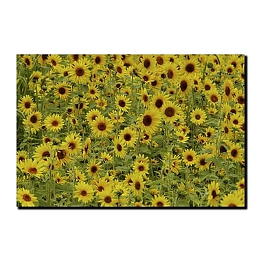 Trademark Fine Art A Sunflower Day by Kurt Shaffer-Gallery Wrapped Canvas 1 18x24 Inches