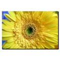 Trademark Fine Art Yellow Gerber by Kurt Shaffer-Gallery Wrapped Canvas