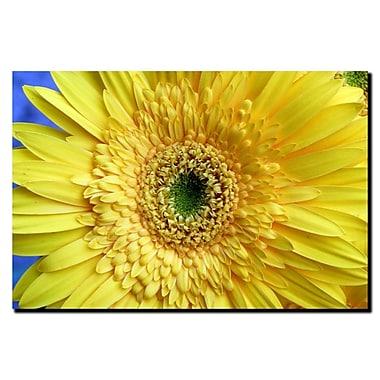 Trademark Fine Art Lazaro Amaral 'Abstract VI' Canvas Art