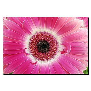 Trademark Fine Art Pink Gerber-Gallery Wrapped Canvas Art 24x32 Inches