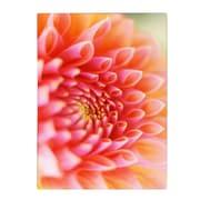 Trademark Fine Art Kathy Yates 'New Beginnings' Matted Art Black Frame 11x14 Inches