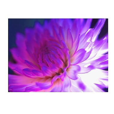 Trademark Fine Art Kathy Yates 'Mod Dahlia' Canvas Art 30x47 Inches