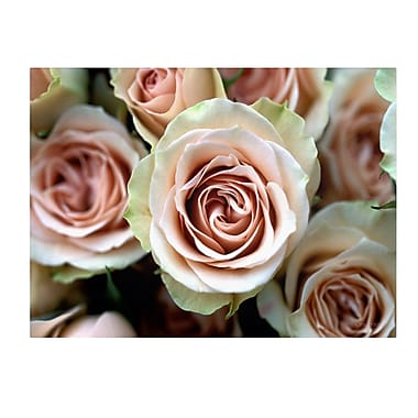 Trademark Fine Art Kathy Yates 'Pale Pink Roses' Canvas Art 30x47 Inches