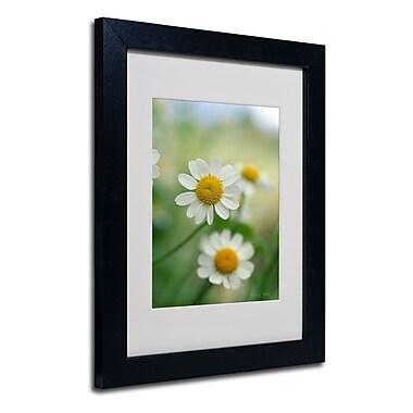 Trademark Fine Art Kathy Yates 'Chamomile' Matted Art Black Frame 16x20 Inches