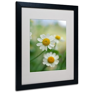 Kathy Yates 'Chamomile' Matted Framed Art - 11x14 Inches - Wood Frame