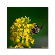 Trademark Fine Art Lois Bryan 'Fanfare for the Common Bumblebee' Canvas Art
