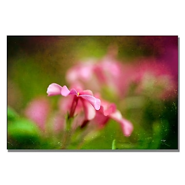 Trademark Fine Art Lois Bryan 'Pink Phlox' Canvas Art 22x32 Inches