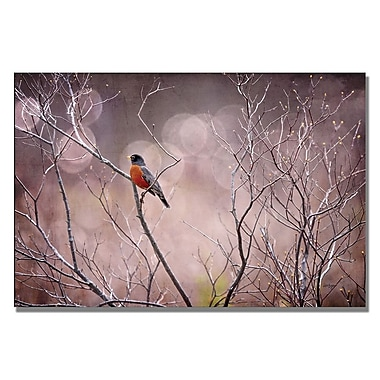 Trademark Fine Art Lois Bryan 'Robin in Shades of Grey' Canvas Art 30x47 Inches