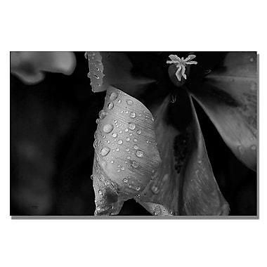 Trademark Fine Art Lois Bryan 'Tulip in the Rain B&W' Canvas Art 30x47 Inches