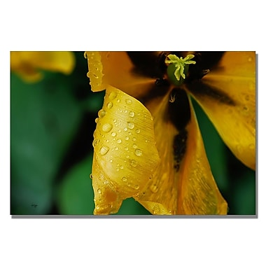 Trademark Fine Art Lois Bryan 'Tulip in the Rain' Canvas Art 22x32 Inches