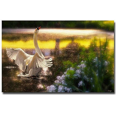 Trademark Fine Art Lois Bryan 'Swan Lake' Canvas Art 16x24 Inches