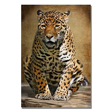 Trademark Fine Art Lois Bryan 'Cheetah' Canvas Art 30x47 Inches