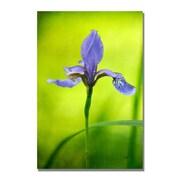 Trademark Fine Art Lois Bryan 'Iris' Canvas Art 18x24 Inches